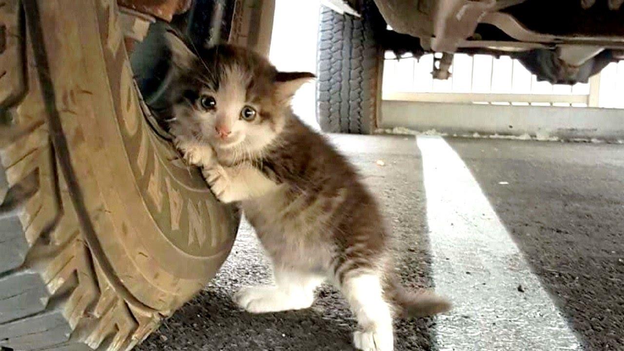 Не выбрасывайте котят на улицу!